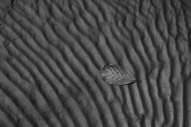 Artwork of a leaf on sand by Eliseu Cavalcante